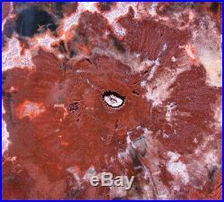 SiS BRICK RED WOODWORTHIA Rare Madagascar Petrified Wood Round