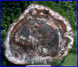 SiS DARK WARM COLORS 10 Madagascar Petrified Wood Round CLASSIC GEM WOOD