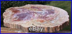 SiS EXTRAORDINARY TIE DYE 16+ Arizona RAINBOW Petrified Wood Round