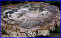SiS FASCINATING 12 Madagascar Petrified Wood GEODE Slab VERY COOL