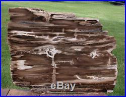 SiS GIANT 17+ KNOTTY Rip Cut Petrified Wood Plank McDermitt, Oregon