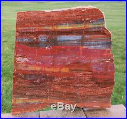 SiS GLORIOUS 12 Arizona Rainbow Petrified Wood Slab STUNNING RIP CUT PLANK