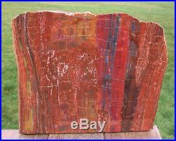 SiS GLORIOUS 14 Arizona Rainbow Petrified Wood Slab STUNNING RIP CUT PLANK