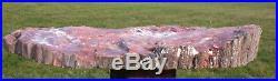 SiS GLOWING PURPLE & ORANGE 15 Arizona RAINBOW Petrified Wood Round Heel Cut