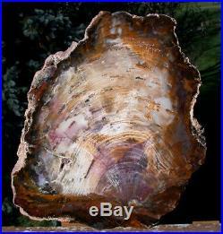 SiS GORGEOUS 12+ Hubbard Basin Petrified Wood Slab INSANE WOOD GRAINY