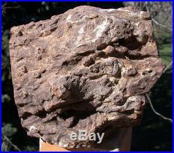 SiS HUGE 8+ lb. KNOTTED STUMP Petrified Woodworthia Log Zimbabwe, Africa