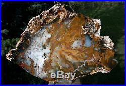 SiS HYPNOTIC 11 Hubbard Basin Petrified Wood Round GREAT WOOD GRAIN