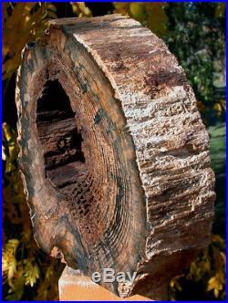 SiS INCREDIBLE 10 lb. HOLLOW LOG Petrified Wood Sculpture McDermitt, OR