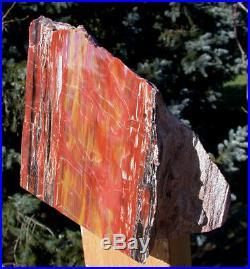 SiS MAGNIFICENT RIP CUT 17 lb ARIZONA Petrified Wood Display Natural Sculpture