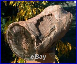 SiS MASSIVE 10+ lb. KNOTTED & POLISHED Petrified Woodworthia Log Zimbabwe