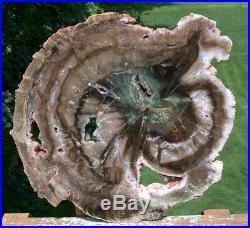 SiS MASSIVE 12+ GREEN HEART African Woodworthia Petrified Wood CRYSTAL GEODES