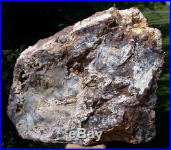 SiS MASSIVE 12 SCULPTURE Hubbard Basin Petrified Wood Polished Log Mantle Pc