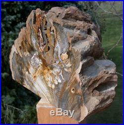 SiS MASSIVE 18 lb. Deschutes Canyon Oak Petrified Wood -Beautiful Log Sculpture