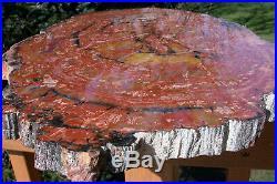 SiS MASSIVE 26 Arizona Rainbow Petrified Wood Conifer Round GREAT TABLE TOP