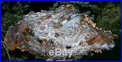 SiS MESMERIZING Light Blue 15 Hubbard Basin Petrified Wood Round