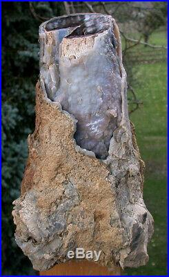SiS MUSEUM GRADE 16 lb. Blue Forest Petrified Wood Log AMAZING ROOTY STUMP