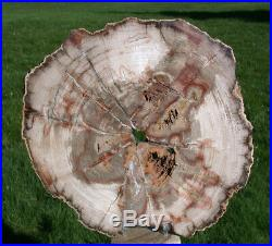 SiS MY BEST 10 BURMESE Petrified Wood Round from MYANMAR FOSSIL BASRALOCUS