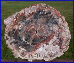 SiS MY BEST 11 Arizona FUNGUS INVADED Petrified Wood Choice Collector Piece
