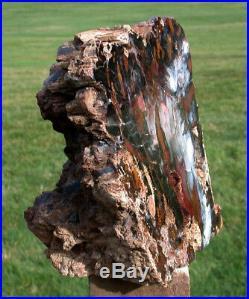 SiS MY BEST COLOR 9# Hubbard Basin Petrified Wood Sculpture STUNNING ARTWORK