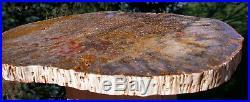 SiS MY BEST COLOR YET! 11 BURMESE Petrified Palm Wood Specimen from Myanmar