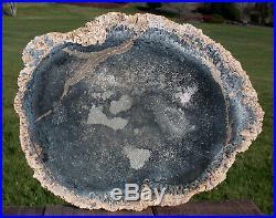 SiS MY BEST EVER Wyoming Petrified PALM Wood 12+ Round RARE & WONDROUS
