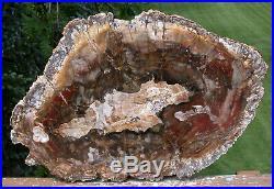 SiS MY BEST QUALITY 15 Madagascar Petrified Wood Slab Simply GORGEOUS Round