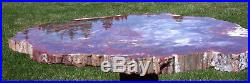 SiS MY FAVORITE RAINBOW 19 Gorgeous Arizona Petrified Wood Round TABLE TOP