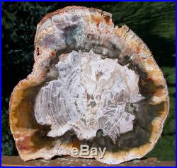 SiS NEW YELLOW, RED & GREEN Madagascar Petrified Wood Slab TRULY INCREDIBLE