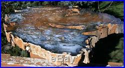 SiS PHENOMENAL 15+ Hubbard Basin Petrified Wood Round TRULY MUSUEUM GRADE