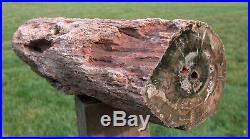 SiS PREMIUM QUALITY 10+ lb. Petrified Wood Log DRAMATIC African DADOXYLON
