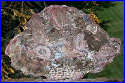 SiS RARE 16+ Arizona FUNGUS INVADED Petrified Wood Full Round Museum Piece