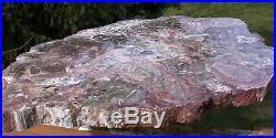 SiS RARE 17+ Arizona FUNGUS INVADED Petrified Wood Full Round Museum Piece