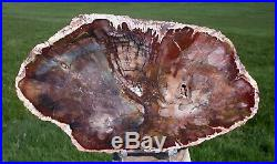 SiS RARE & MYSTERIOUS Madagascar Petrified Wood Round Rhexoxylon africanum