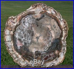 SiS UNIQUE 14 Madagascar Petrified Wood GEODE Slab REALLY EYE CATCHING