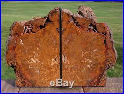 SiS Unusual GOLD & RED Hubbard Basin Petrified Wood Bookends 8+ lb Set