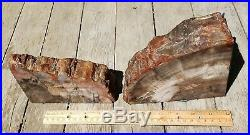 Spectacular Petrified Wood Bookends Felted FREE SHIPPING