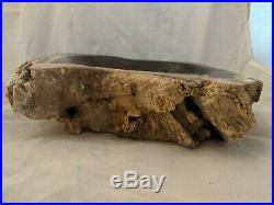 Stunning Large Petrified Wood Bowl Fossil Tree Stone Natural Live Edge Bark