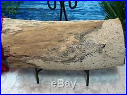 VIRGIN VALLEY OPAL Petrified WoodRARE LARGE COMPLETE ROUND LOG/BRANCH 10/8 LBS