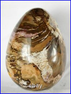 Very Large Petrified Fossil Wood Egg Decor Great Gift Art 9 x 6 Interior Design
