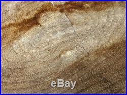 Very Rare Petrified Wood Snakewood Mennegoxylon Jonesii Texas Fossil wood